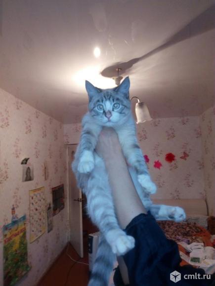Отдам кота-подростка