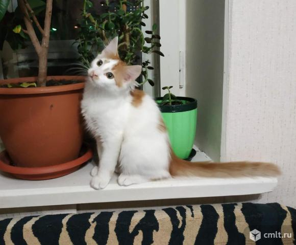 Очаровательный котик ищет заботливых хозяев.
