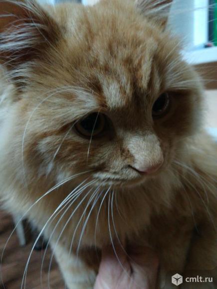 Кота солнечного продаю. Фото 1.