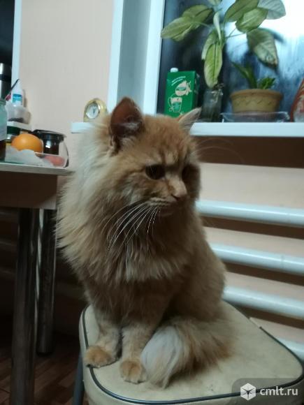 Кота солнечного продаю. Фото 2.