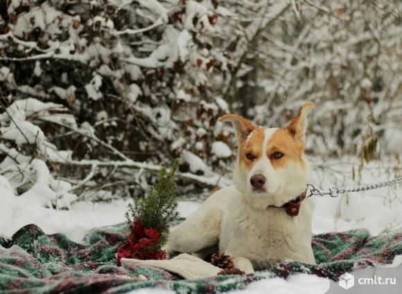 Благородная собака Белка