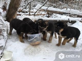 Замерзают собачата