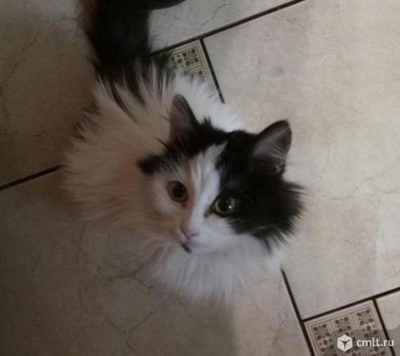 Кошечка (котенок) в добрые руки. Фото 3.