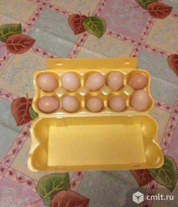 Инкубационное яйцо китайских шёлковых кур. Фото 1.