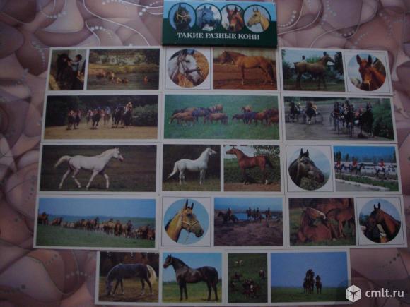 """Комплект открыток """"Такие разные кони"""". Фото 4."""