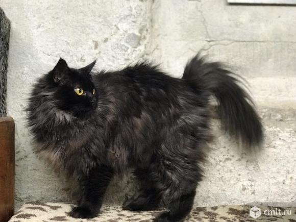 Красивая черная кошечка ищет дом. Фото 6.