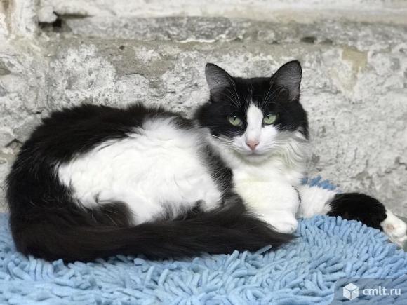 Черно-белая кошечка ищет доброго хозяина. Фото 2.