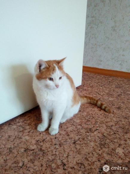 Молодой котик Лисенок