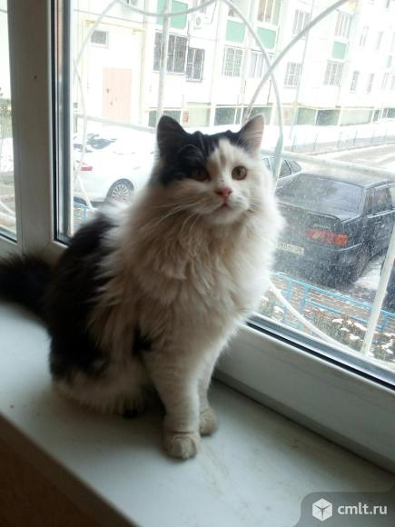Молодой кот Мурзик