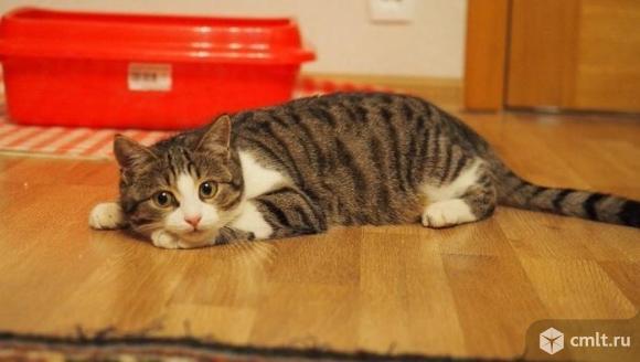 Кот Борис из рекламы Китикет в дар