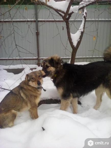 Собака - друг для семьи
