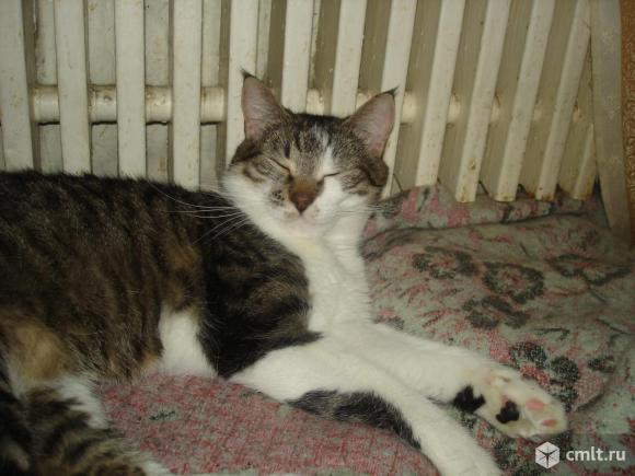 Молодой котик Фороська - в надежные руки