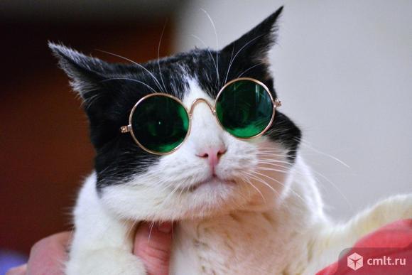 Официальный кото-двойник Григория Лепса в Воронеже. Фото 1.