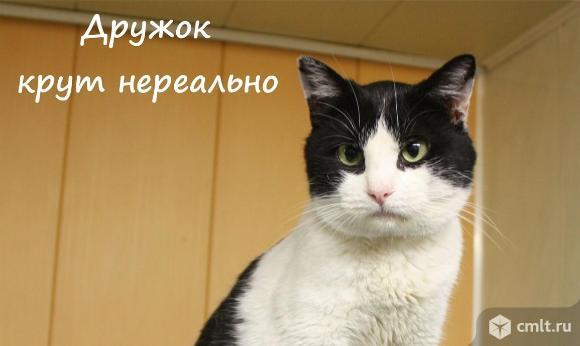 Официальный кото-двойник Григория Лепса в Воронеже. Фото 3.