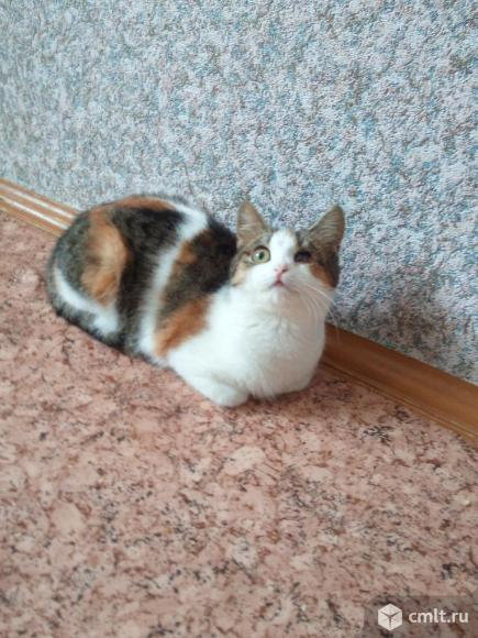 Кошечка Мэри. Фото 3.