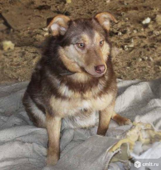 Собачка по имени Киса