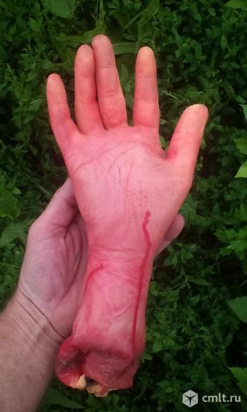 Резиновая рука. Фото 1.