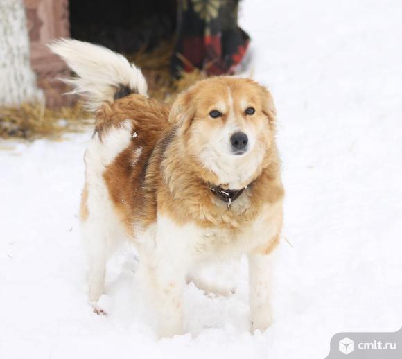 Огненная собачка по имени Забава!. Фото 1.