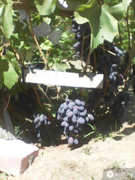 Посадка и уход за ягодными насадждениями и садом. Фото 2.