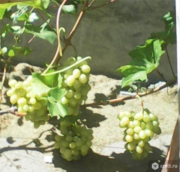 Посадка и уход за ягодными насадждениями и садом. Фото 1.