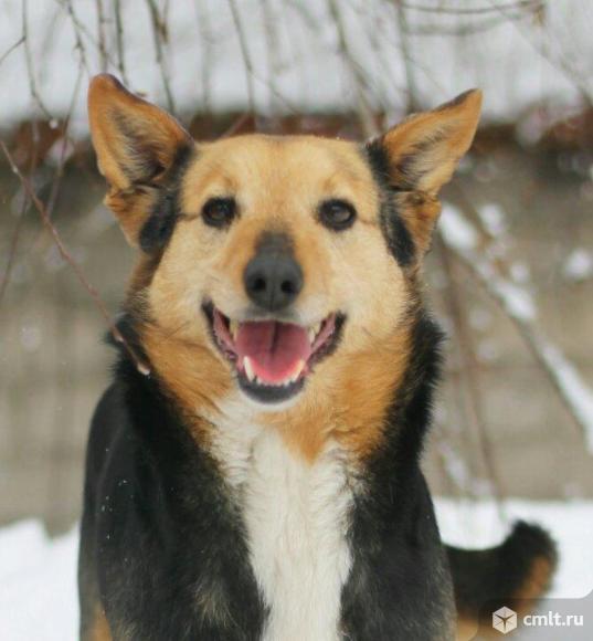Шустрая собачка по имени Мелкая. Фото 1.