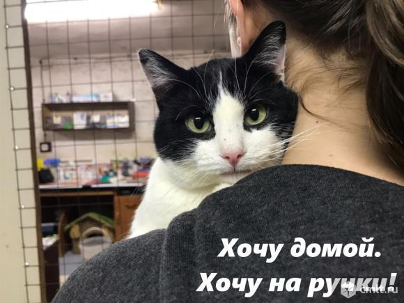 """Дружок настоящий """"Мистер Очарование"""". Фото 1."""
