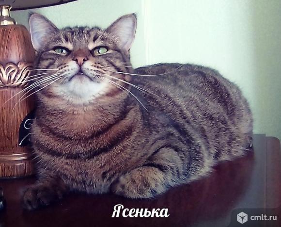 Кошечка Яся ищет дом. Фото 1.