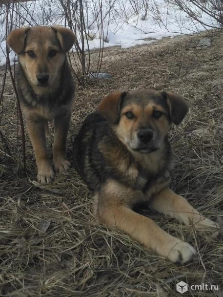 Супер-щенки ищут дом. Фото 9.