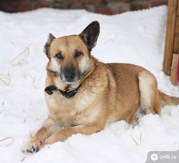 Настоящий мужчина- пес по имени Молодой. Фото 1.
