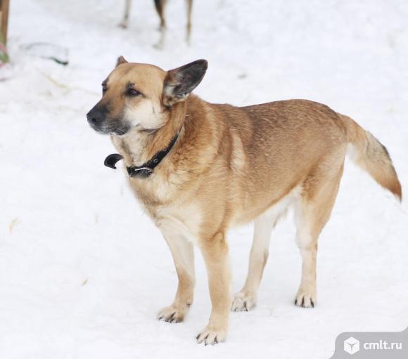 Настоящий мужчина- пес по имени Молодой. Фото 5.