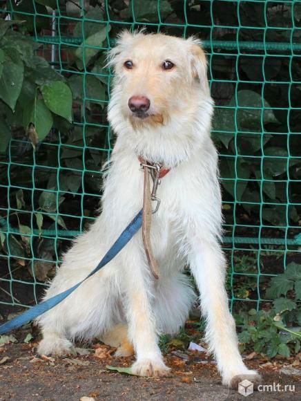 Молоденькая собачка Сара. Фото 2.