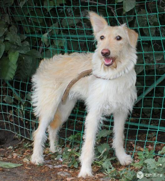 Молоденькая собачка Сара. Фото 1.