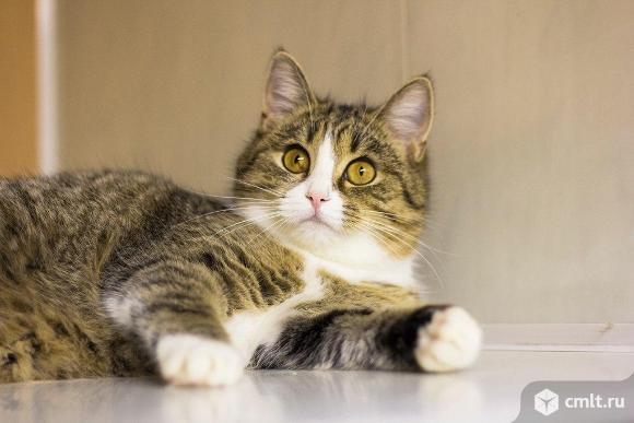 Галочка спокойная кошка. Фото 1.