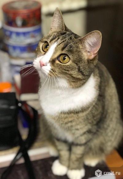 Галочка спокойная кошка. Фото 3.