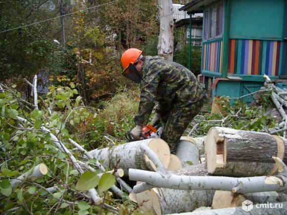 Работы по спиливанию, распиливанию, обрезке деревьев в Воронеже и области. Опытная команда, русская бригада без вредных привычек. Оперативно, быстро, недорого, грамотно. Распиловка на дрова