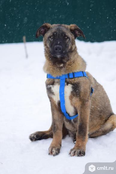 Собака Хантер. Фото 1.