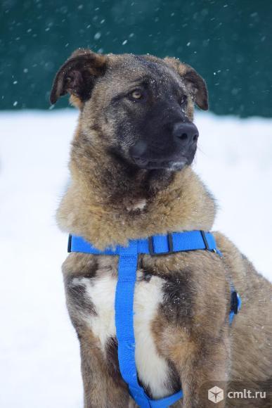 Собака Хантер. Фото 2.