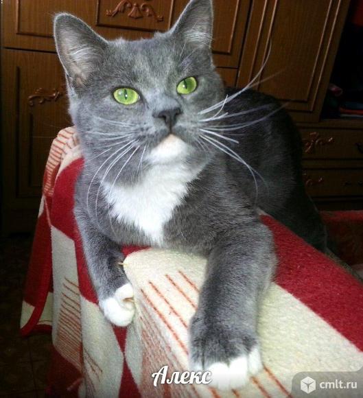 Кот Алекс ищет дом.. Фото 3.