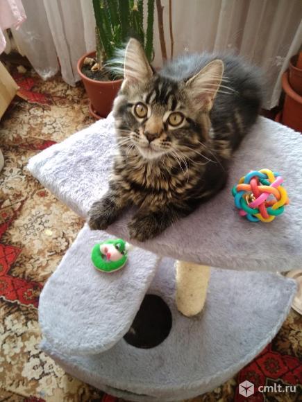 Кошки. Фото 6.