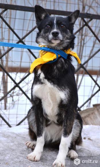Миниатюрная собачка Тэсса. Фото 2.