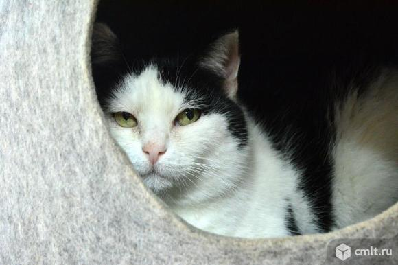 Кошка Ириска ищет дом. Фото 1.