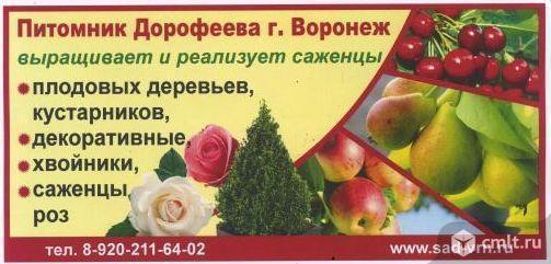 Семейный питомник Дорофеева. Фото 1.