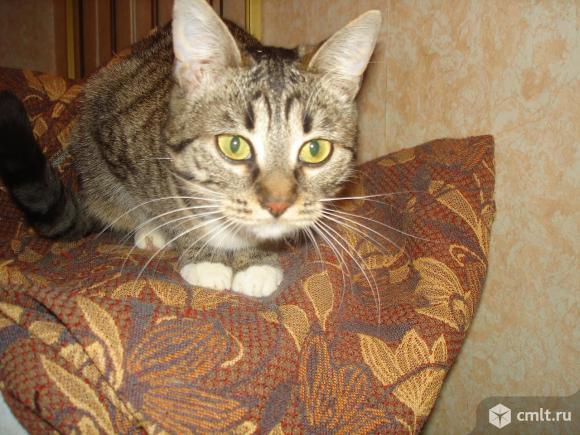 Кошечка-подросток Бася - в любящую надежную семью. Фото 1.