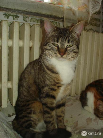 Кошечка-подросток Бася - в любящую надежную семью. Фото 3.