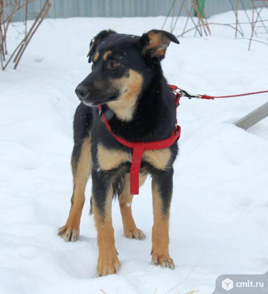 Собачка Полли, стерилизована, 7 мес. Фото 1.