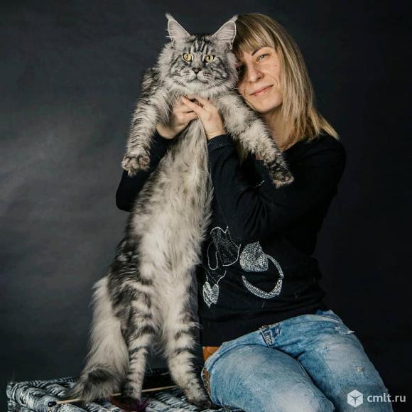 Котята Мейн Кун. Фото 4.