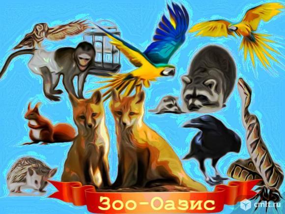 Зоо-Оазис. Фото 1.