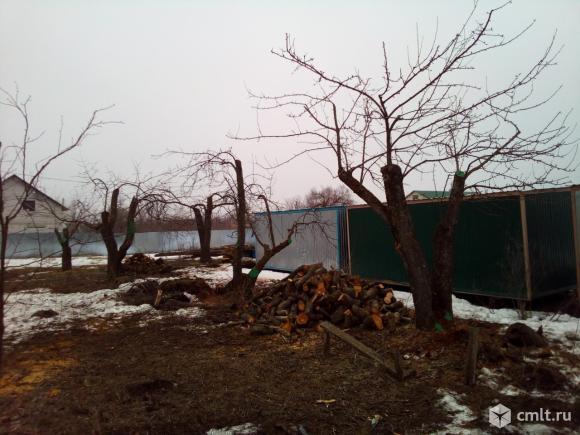 Спиливание деревьев любой сложности. Фото 8.