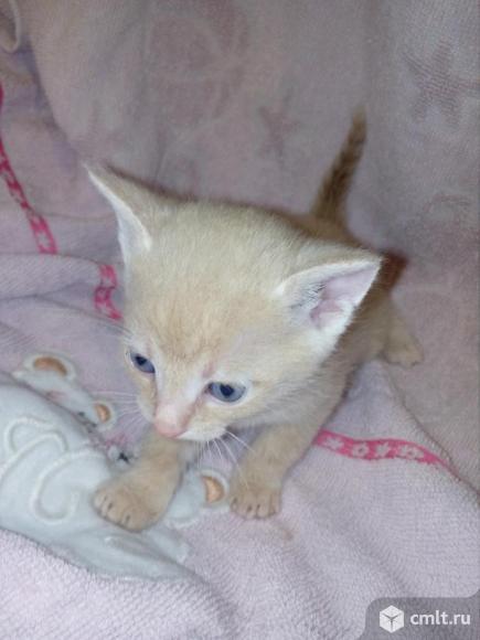 Котят в добрые руки. Фото 9.