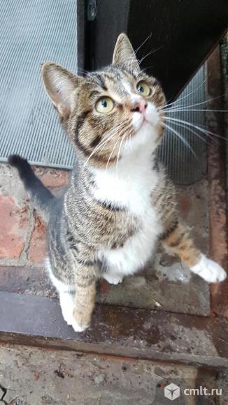 Котенок Гарфилд ищет дом. Фото 1.